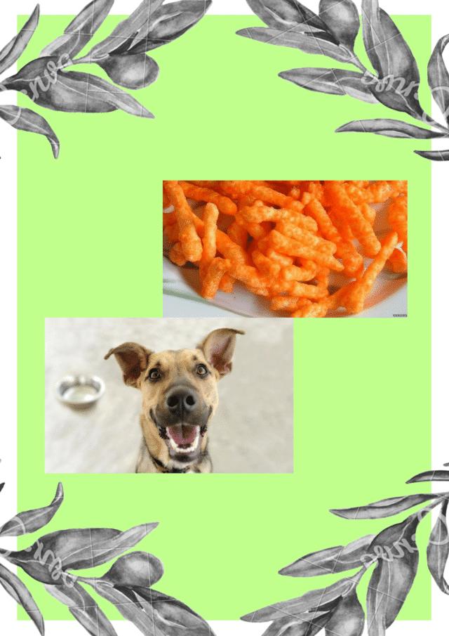 can dog eat cheetos